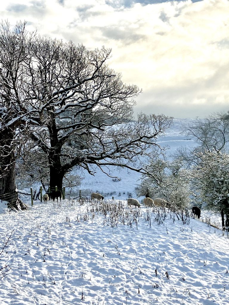 Yes, it's hard to beat the North York Moors - at any time of year @TFaneS on Twitter